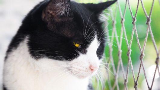 Katzenschutznetze