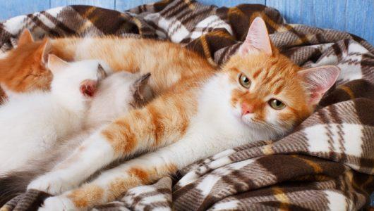 Wurfkiste für die trächtige Katze