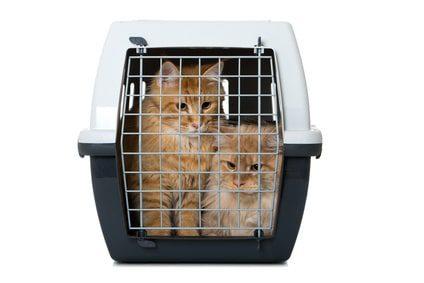 Transportbox für 2 Katzen