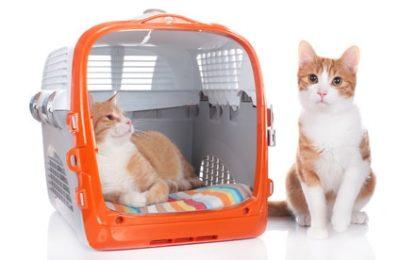 XXL Katzenbox für 2 Tiere