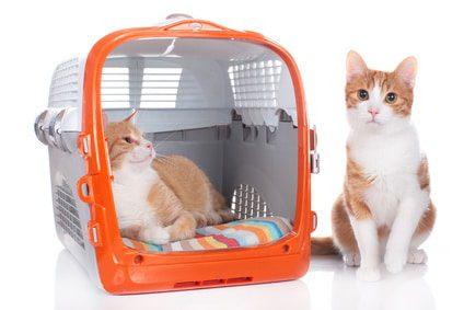 Transportbox für 2 Katzen - Extra große Katzenboxen