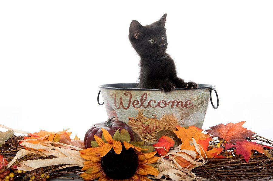 Erstausstattung Katzen - Basisausstattung Katze: Checkliste