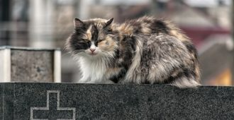 Katze Tierfriedhof