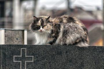 Katze ist verstorben – Gedenksteine, Urnen und Co. – Möglichkeiten für ein würdevollen Abschied