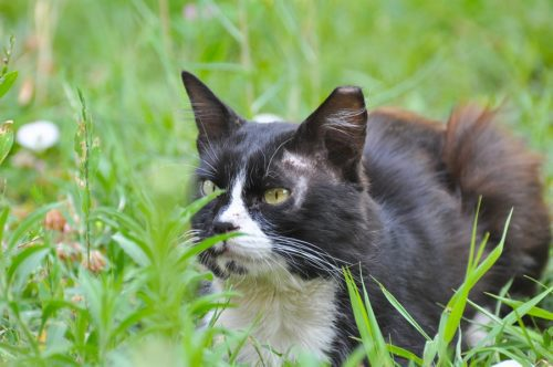 Katze Freigang - Tipps