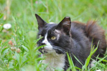 Freigang für Katzen – Auf was sollte man unbedingt achten?
