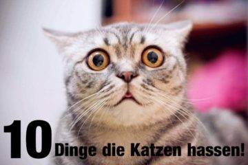 10 Dinge die unsere Katzen hassen
