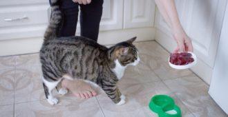 Tipps für die Fütterung älterer Katzen