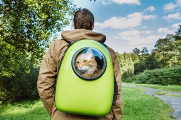 Katzenrucksack für den Transport von Katzen