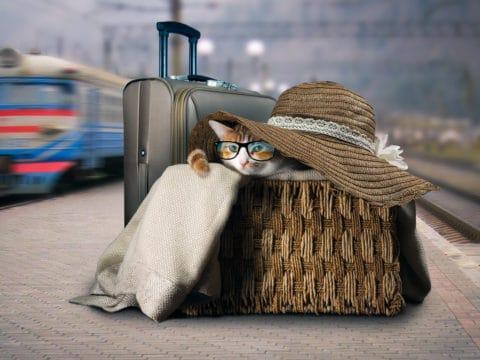Katze unterwegs mit Bus und Bahn