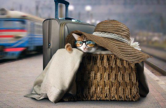 Transport von Katzen in Bus & Bahn – Alternative Transportbehältnisse
