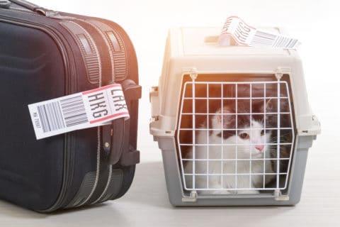 Mit der Katze auf Reisen
