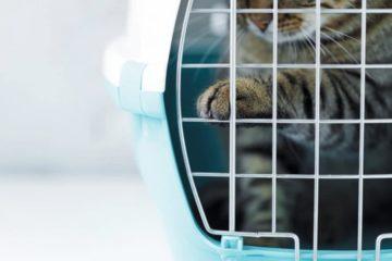 Ratgeber Katzentransportbox – Die richtige Katzenbox finden