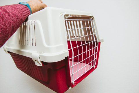 Transportbox für Katzen aus Kunststoff