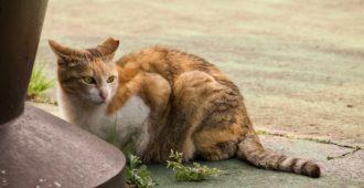 Katze Fundtier aufmnehmen