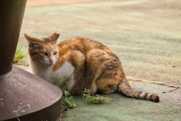 Katze zugelaufen? Was tun?