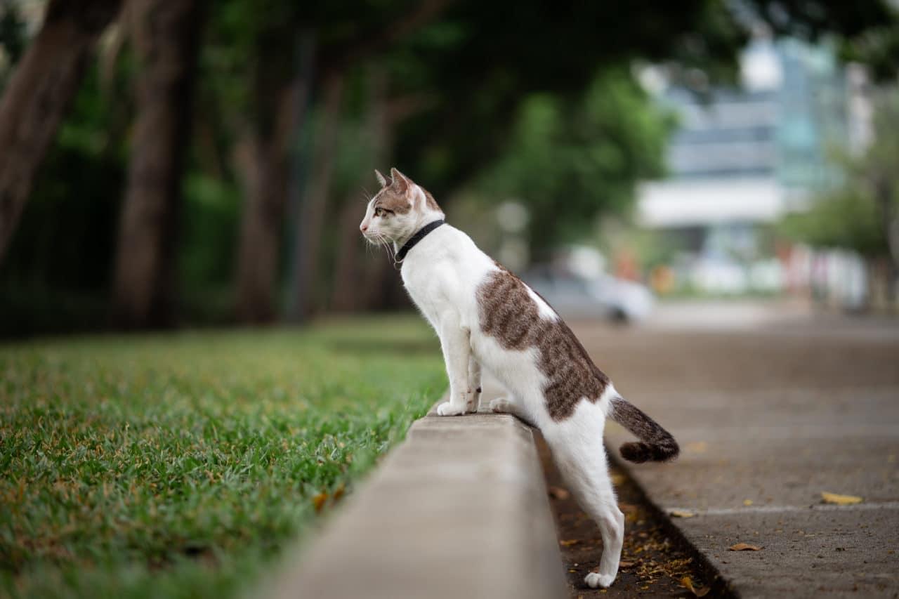 Katze zugelaufen?