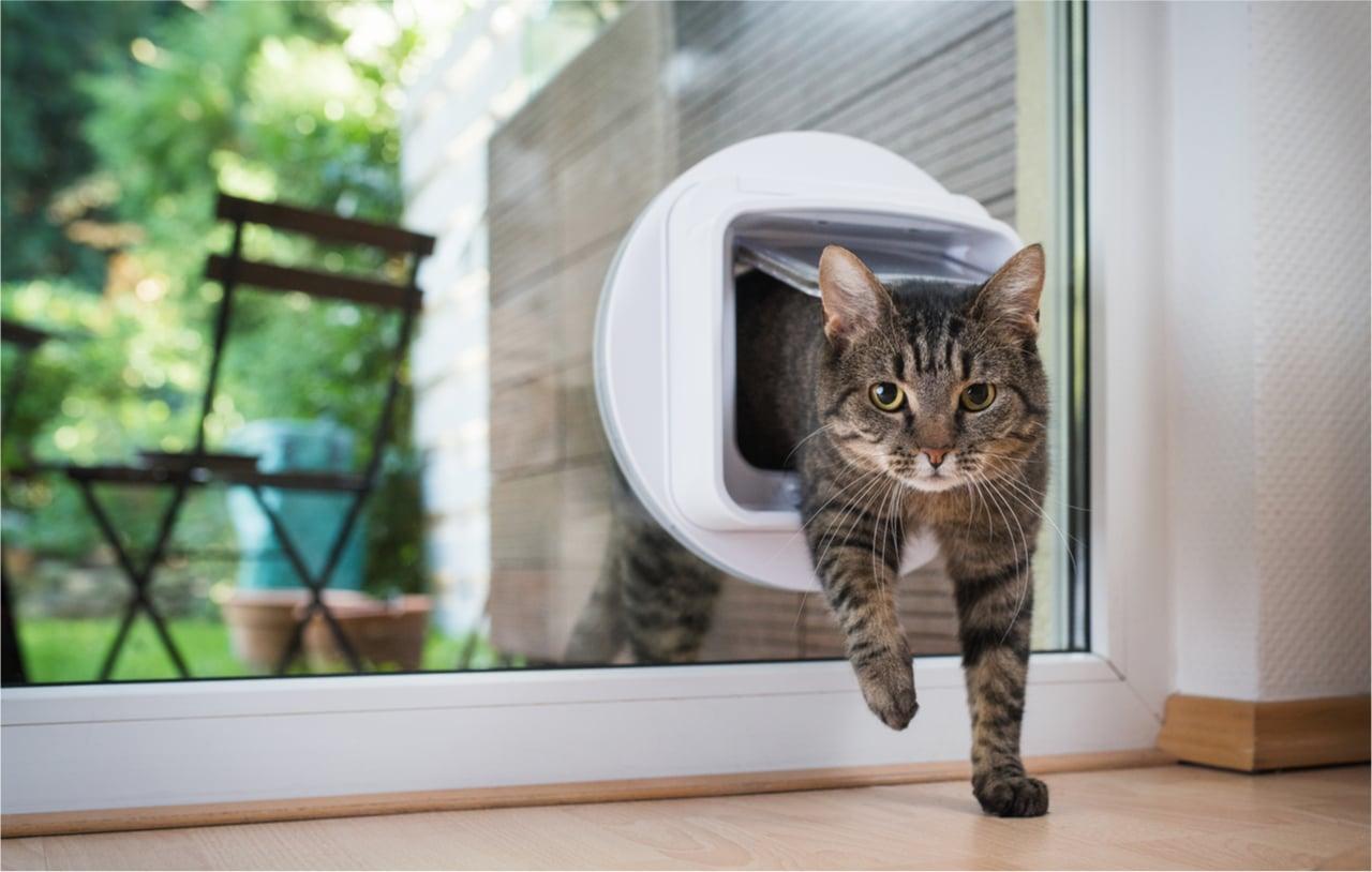 GPS Tracker für Katzen von Weenect