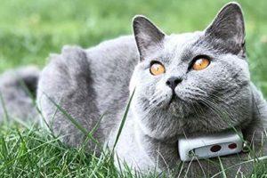 weenect-cats-2-gps-tracker-Bild10