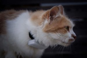 weenect-cats-2-gps-tracker-Bild6