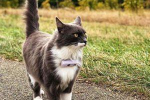 weenect-cats-2-gps-tracker-Bild9