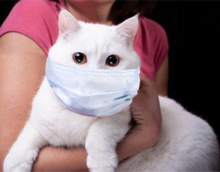 Katzen und Covid19 Virus - Welche Gefahren bestehen?