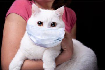 Covid-19 bei Haustieren – Infos für Besitzer von Katzen