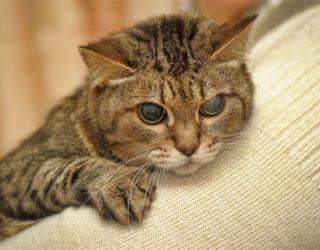 Halb blinde Katze