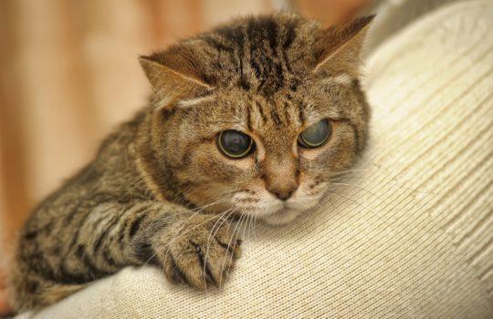 Erblindet meine Katze? Tipps und Tricks für den richtigen Umgang mit blinden Katzen.