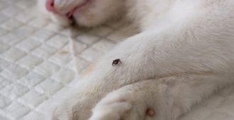 Zeckenbefall Katze