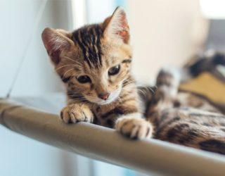 Fensterliege für Katzen