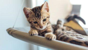Fensterliege für Katzen: Unterhaltungsprogramm für Stubentiger