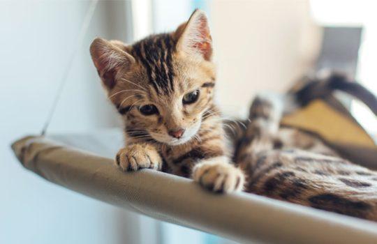 Fensterliege für Katzen –  Das tägliche Unterhaltungsprogramm für den Stubentiger