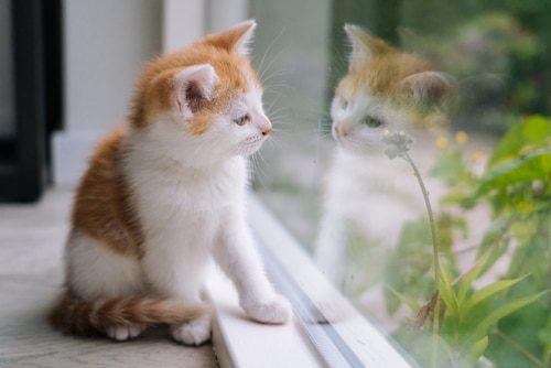 Fensterplatz für Katze