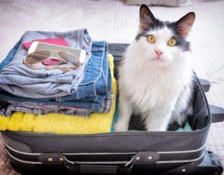Katze auf Reisen