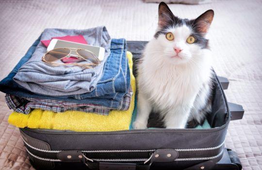 Wohin mit der Katze in der Urlaubszeit?