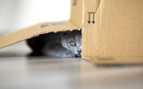 Katze versteckt unter Karton