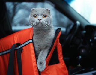 Sleepypod - Dier Kombi aus Transporttasche und Katzenbett