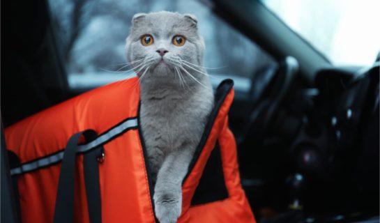 Sleepypod – Kombi aus Katzenbett und Transporttasche
