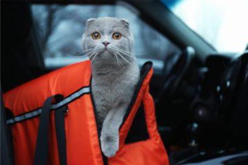 Sleepypod: Kombi aus Katzenbett & Transporttasche