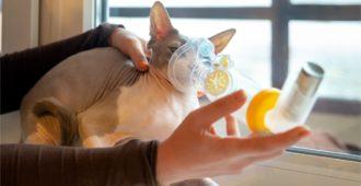 Katze mit Asthma inhaliert Aerosole