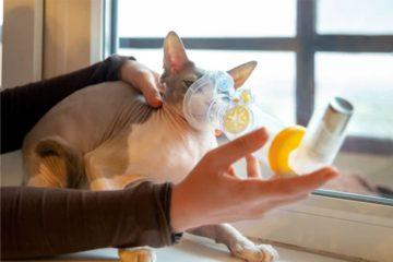 Felines Asthma bei Katzen