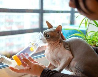 Katze an das inhalieren zur Behandlung von Asthma