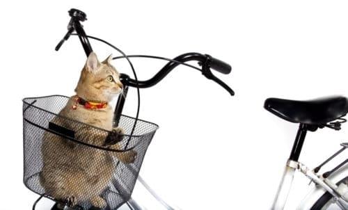 Fahrradkorb Katze