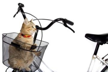 Katze mit Fahrrad transportieren: Aber wie?