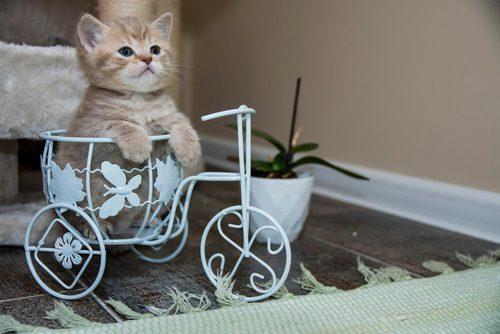 Katze in Fahrradkorb