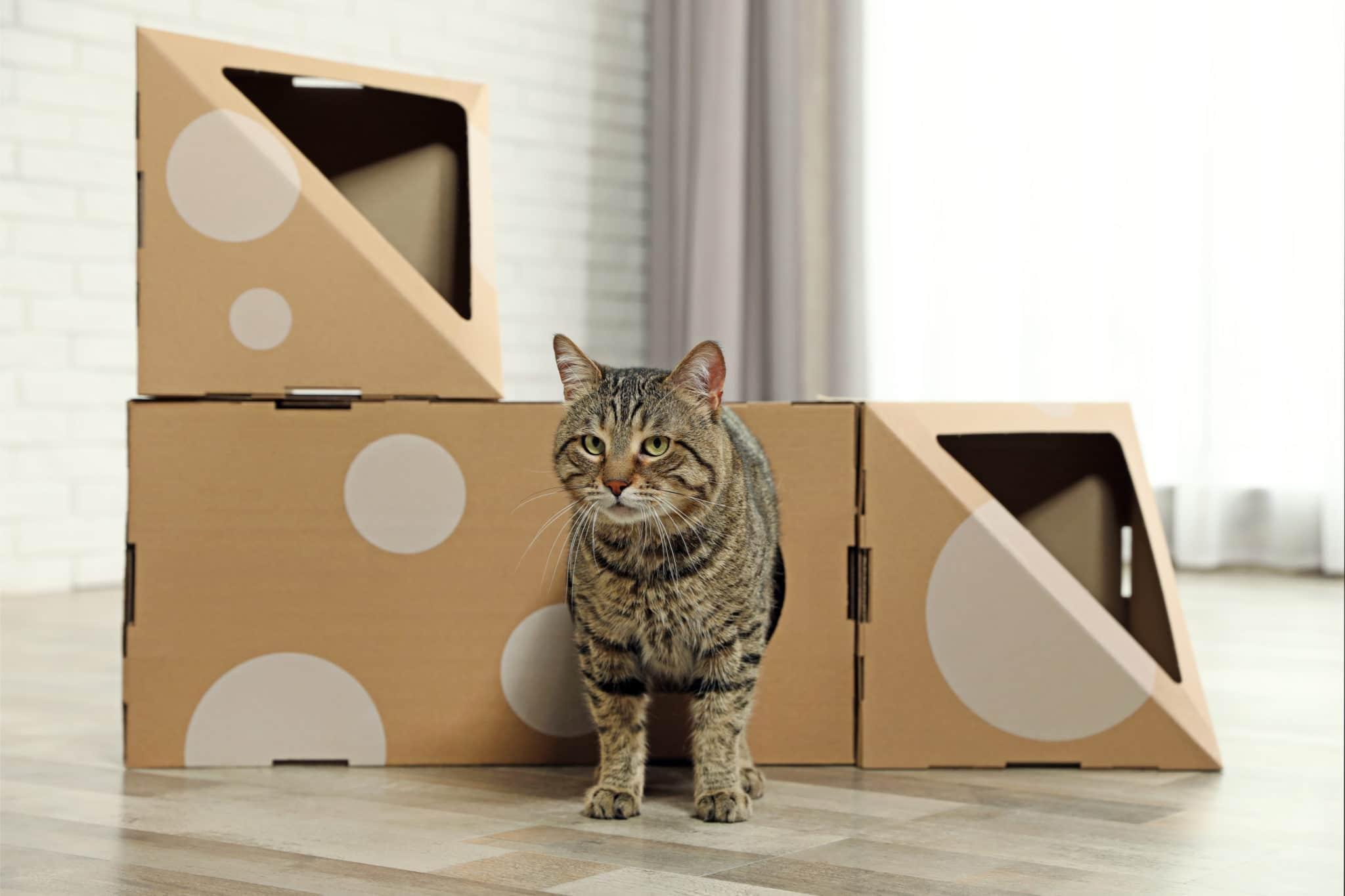 Katzenhaus aus Pappe
