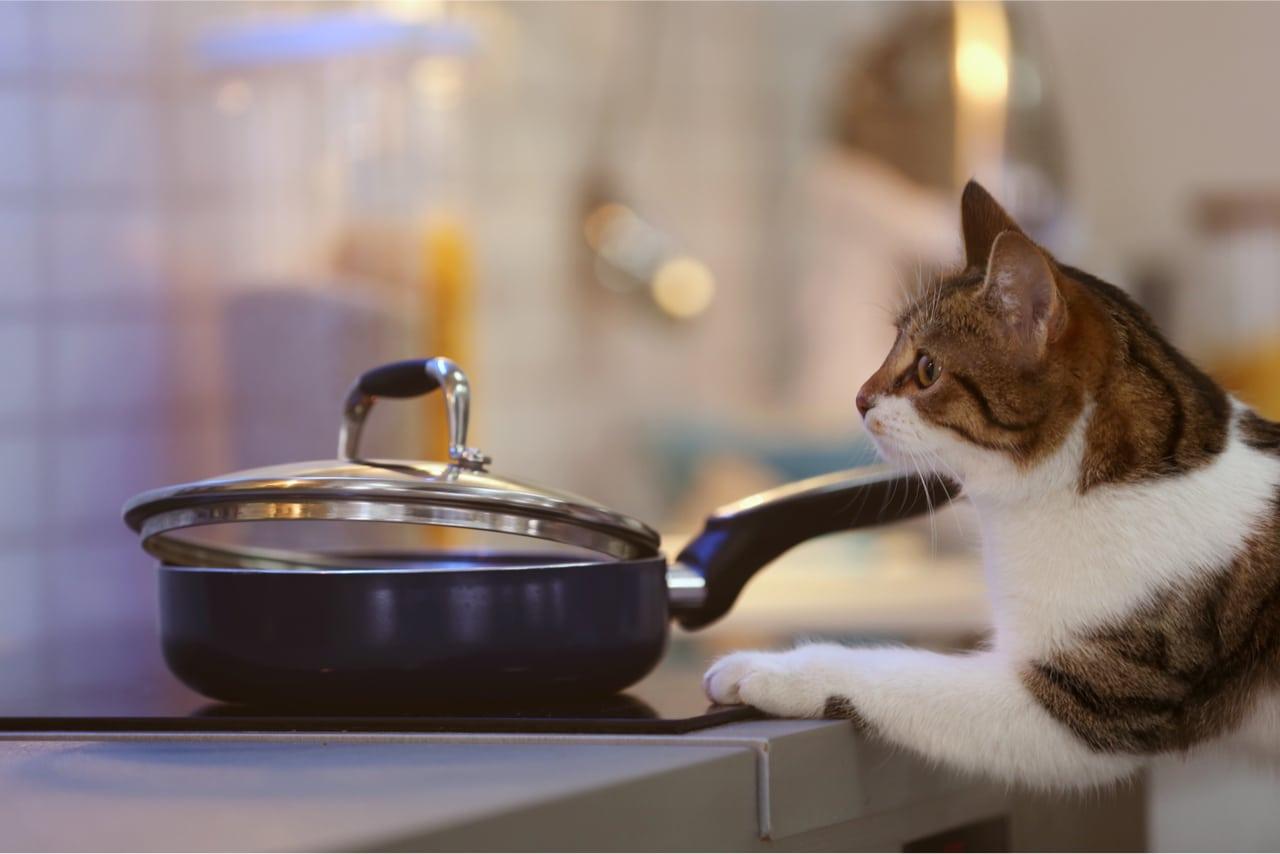 Katze küchenherd