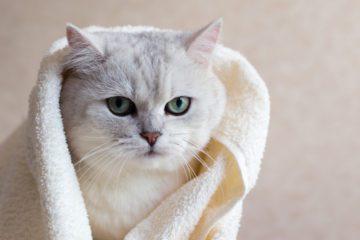 Rückhaltetaschen und Pflegetaschen für Katzen