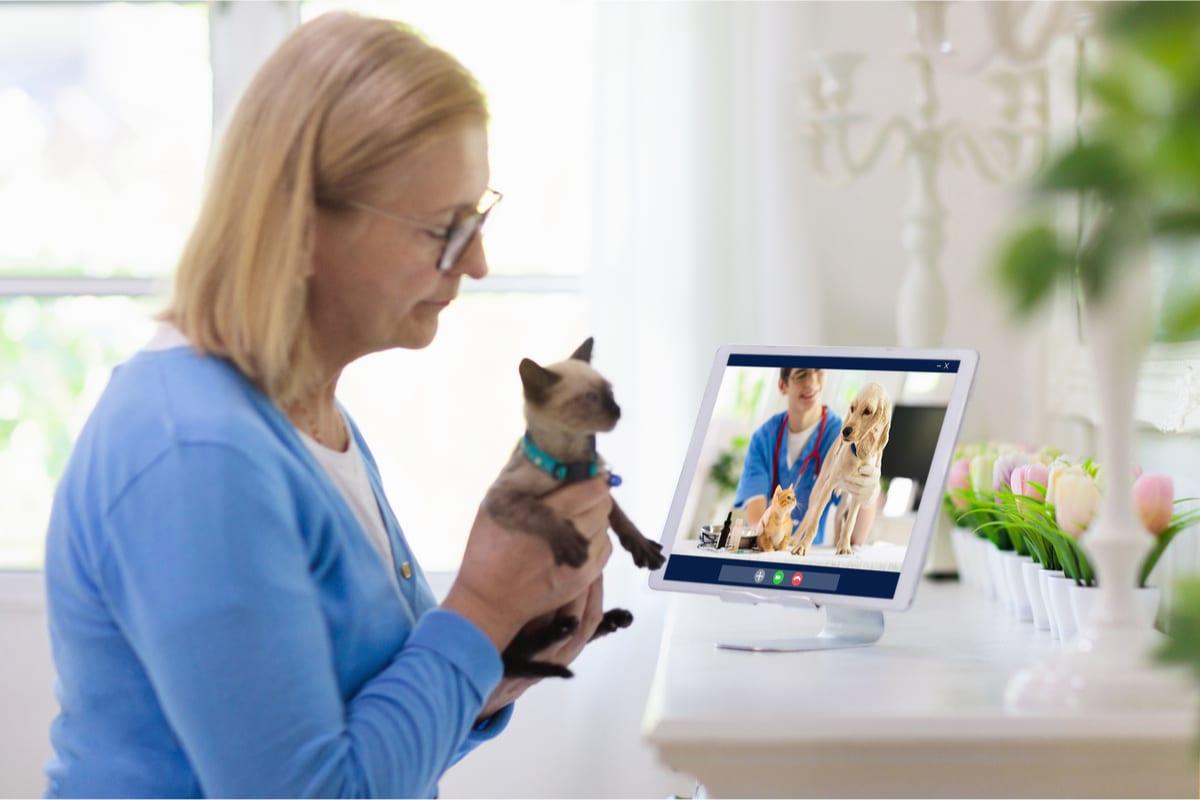 Videochat mit einem Tiermediziner
